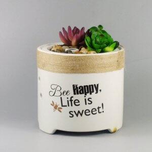 Succulent Plant Ceramic Aroma Diffuser