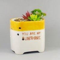 Succulent-artificial-plant-aroma-diffuser-GLEA20164S